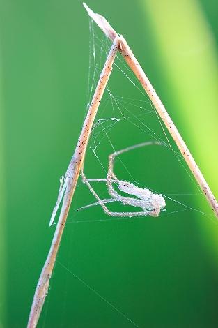 クモの抜け殻